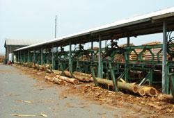 国産材時代の到来で輝きだす木材市場